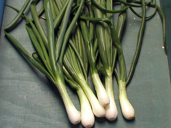 Sweet Texas Spring Onions